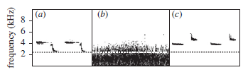 Great tits sing at a higher frequency in noisy cities than in quieter rural areas (from Mockford and Marshall, 2009).