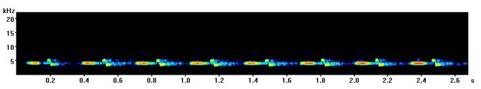 great-tit-spectrogram-bath