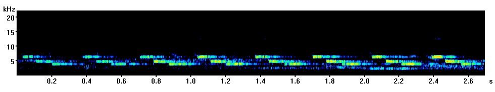 great-tit-spectrogram-durham