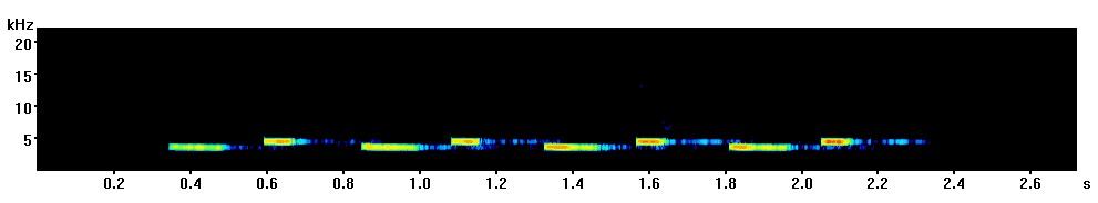 great-tit-spectrogram-derby