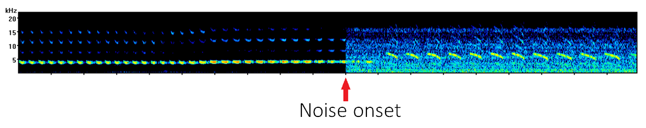Canary song spectrogram with noise