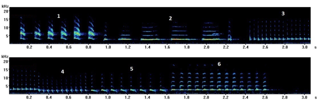 Canary song spectrogram